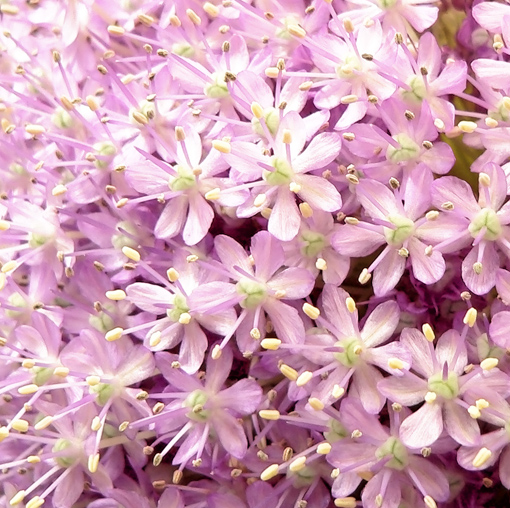 flores-rosas3.jpg